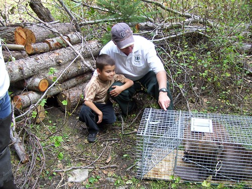 Kent Woodruff, U.S. Forest Service biologist, introducing a local resident named David to a soon-to-be-new-resident beaver