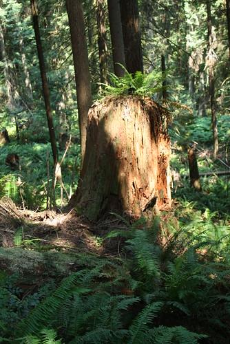 2015-07-06 Stimson hike 009