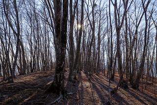 浅間尾根の樹林