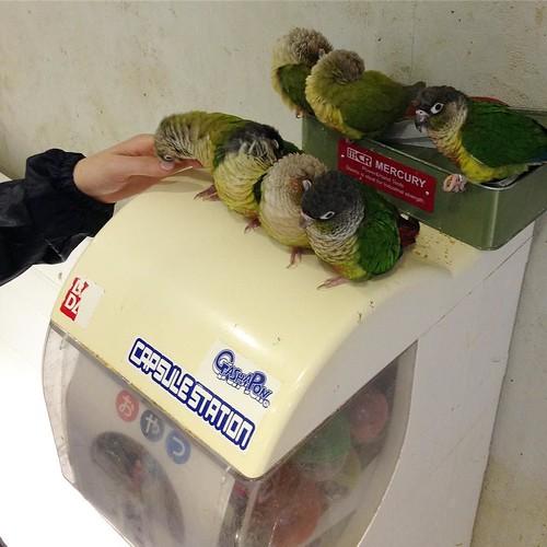 ガチャガチャで、ひまわりの種の「おやつ」が売られてた。