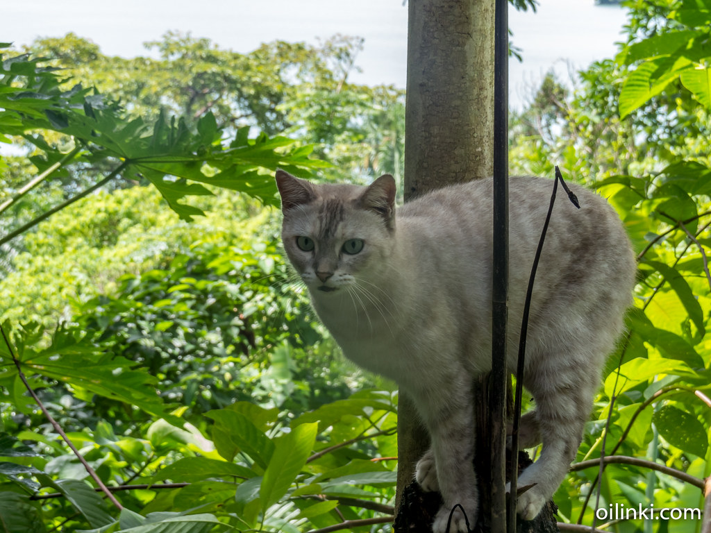 Cat on a tree