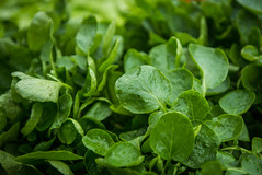 annual plant, leaf, plant, herb, watercress,