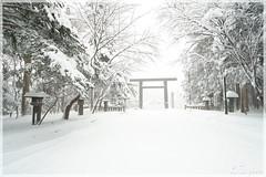 日本北海道.札幌_北海道神宮.41