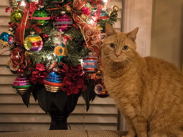 Butterscotch is full of holiday spirit!