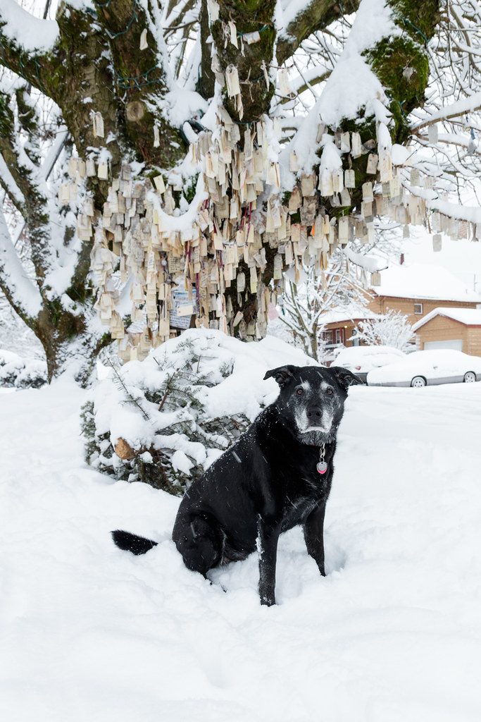 Our dog Ellie sits beside the Wishing Tree as the snow continues to fall