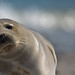 Grey seal youngster by pe_ha45