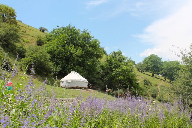 Yurt through purple