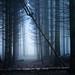 Deep dark forest no.4 by JonoHub