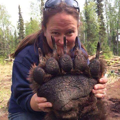 This is what grizzly bear paw look like | Kevin Seawright's WordPress ...