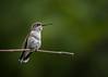 Birds (292)