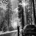 Yosemite Valley by Eric Zumstein