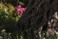 Pairi Daeza, au pays des sens - Atelier Jean Mus & Compagnie - Jardins Jardin 2015 aux Tuileries - Paris