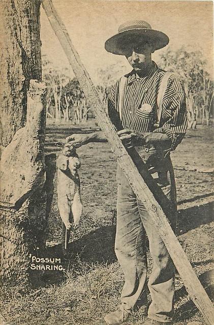 Possum Snaring - Maryborough - circa 1910