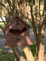 outdoor structure(0.0), branch(1.0), wood(1.0), tree(1.0), birdhouse(1.0), bird feeder(1.0),