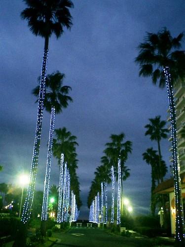 06.12.10「逗子マリーナ」ライトアップ http://mitch1.blog.so-net.ne.jp/2006-12-10-3