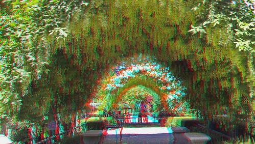 gardens island stereoscopic 3d fuji nursery anaglyph stereo arbor wa bayview whidbey laburnum spm redcyan