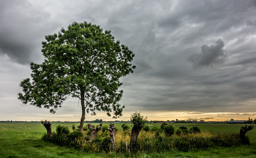 sky tree clouds landscape ttt midden tmt delfland nederlandvandaag coppicedwood