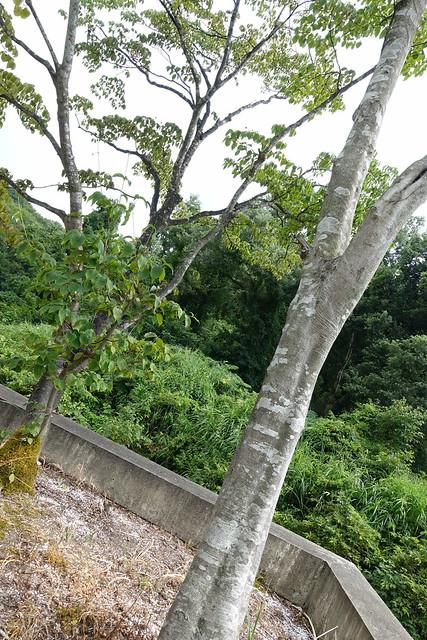 bunagaike botanical garden mothers tree midair garden