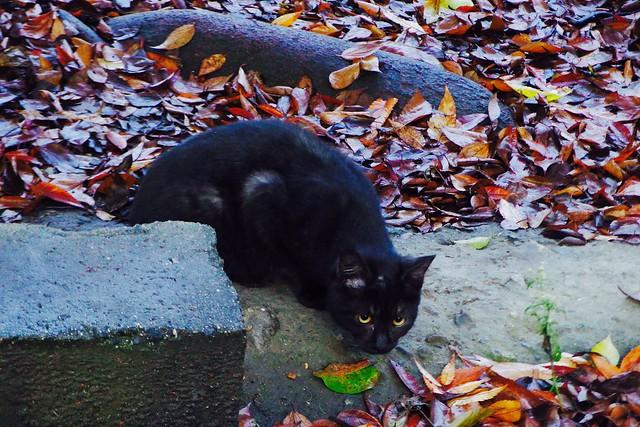Today's Cat@2016-12-11