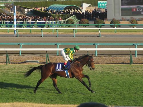 中山競馬場の有馬記念のときのサトノダイヤモンド