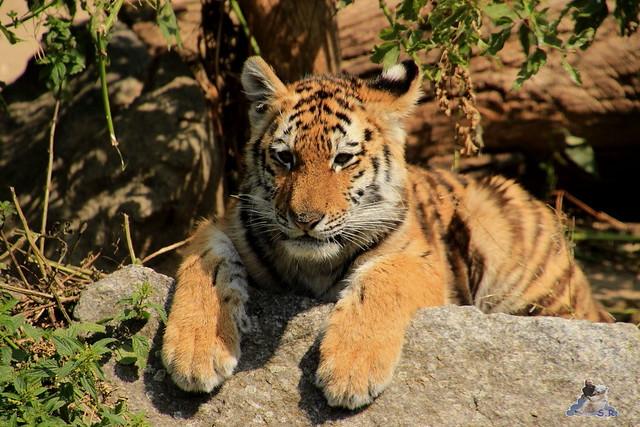 Tierpark Berlin 18.07.2015 0105
