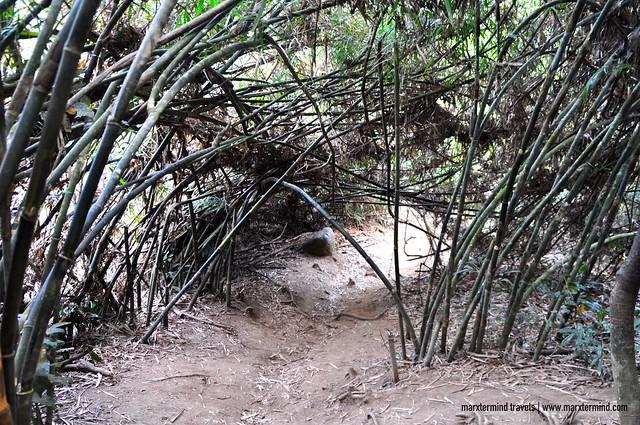 Pico de Loro New Trail