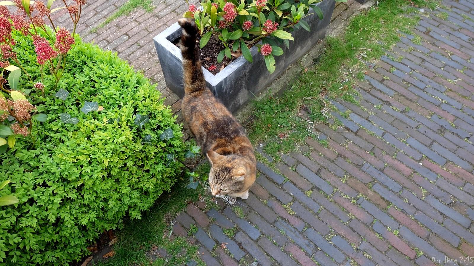 Cat 1, Den Haag, Nederland