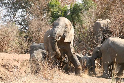 Elephants getting frisky