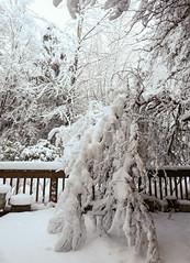 Snowpocalypse 2017_23