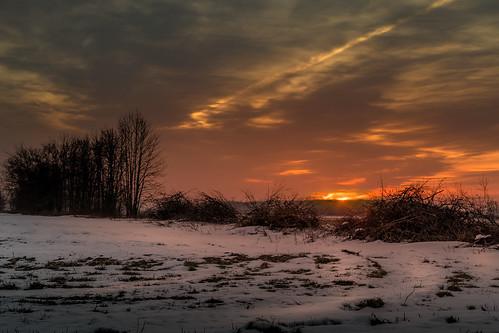 sunrise brush trees lumbering firstlight snow nieve invierno winter december canoneos5dmarkiv cutting piles field campo