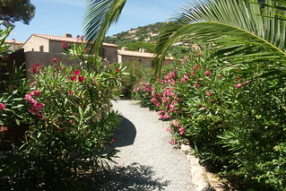 Südfrankreich Ferienhaus Ferienanlage