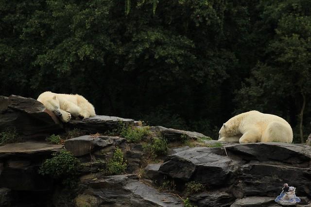 Tierpark Berlin 18.07.2015 0174