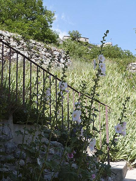escalier et rose trémière