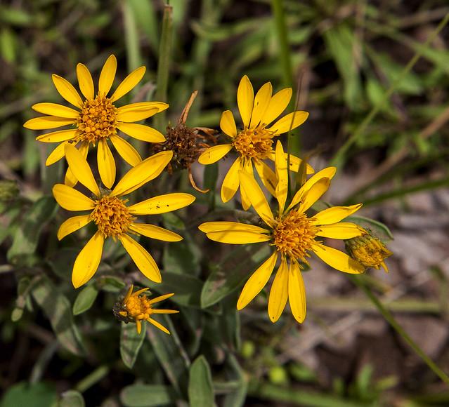 Wild Flower 20d_2191