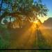 Foggy Morning at Riverbend Park Jupiter Florida by Captain Kimo
