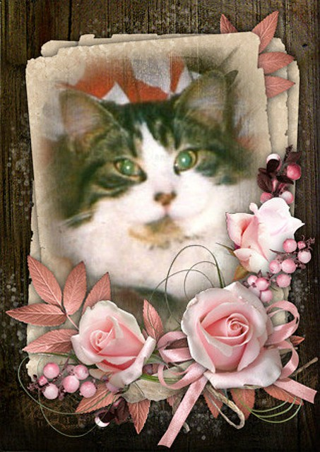 Sweet Mitzi In My Lap Photo And Pink Flowers