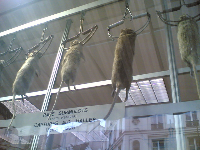 Header of ratcatcher
