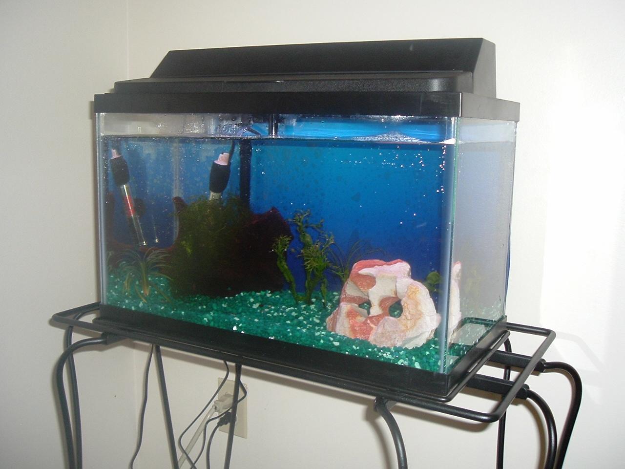 10 gallon aquarium 1 flickr photo sharing for 150 gallon fish tank dimensions