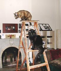 scout_atticus_ladder