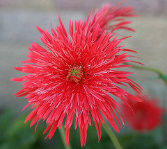 Reddish Flower+