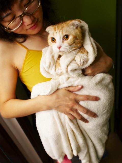 sad cat getting bath