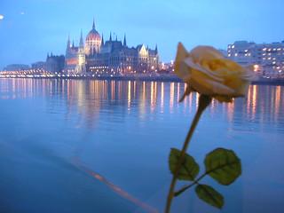 Rosa sul Danubio
