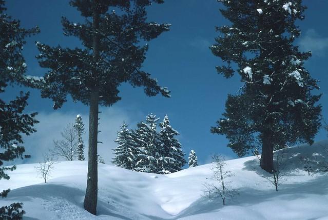 662 Kashmir Winter - Gulmarg Trip