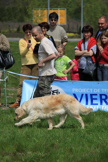 Romanian Rescue Dogs Safe Rescue Clifford