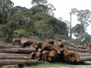 Sustainable logging in Sandakan (FSC certified)