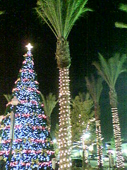 christmas trees 1 : palm trees 4