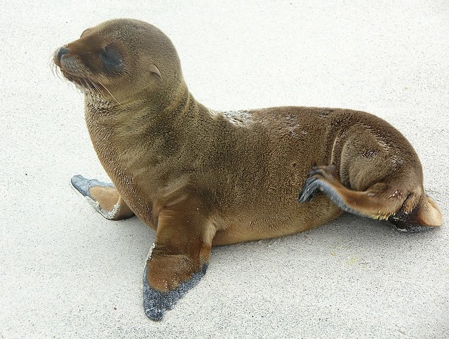 baby sea lion | Flickr - Photo Sharing!
