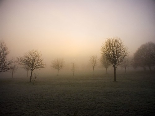 trees light sun mist tree grass fog sunrise frost glow leeds favme bleak middleton printforsale okforitv