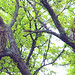 A Pair Of Barred Owls