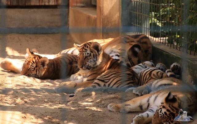 Tierpark Berlin 02.08.2015 0168